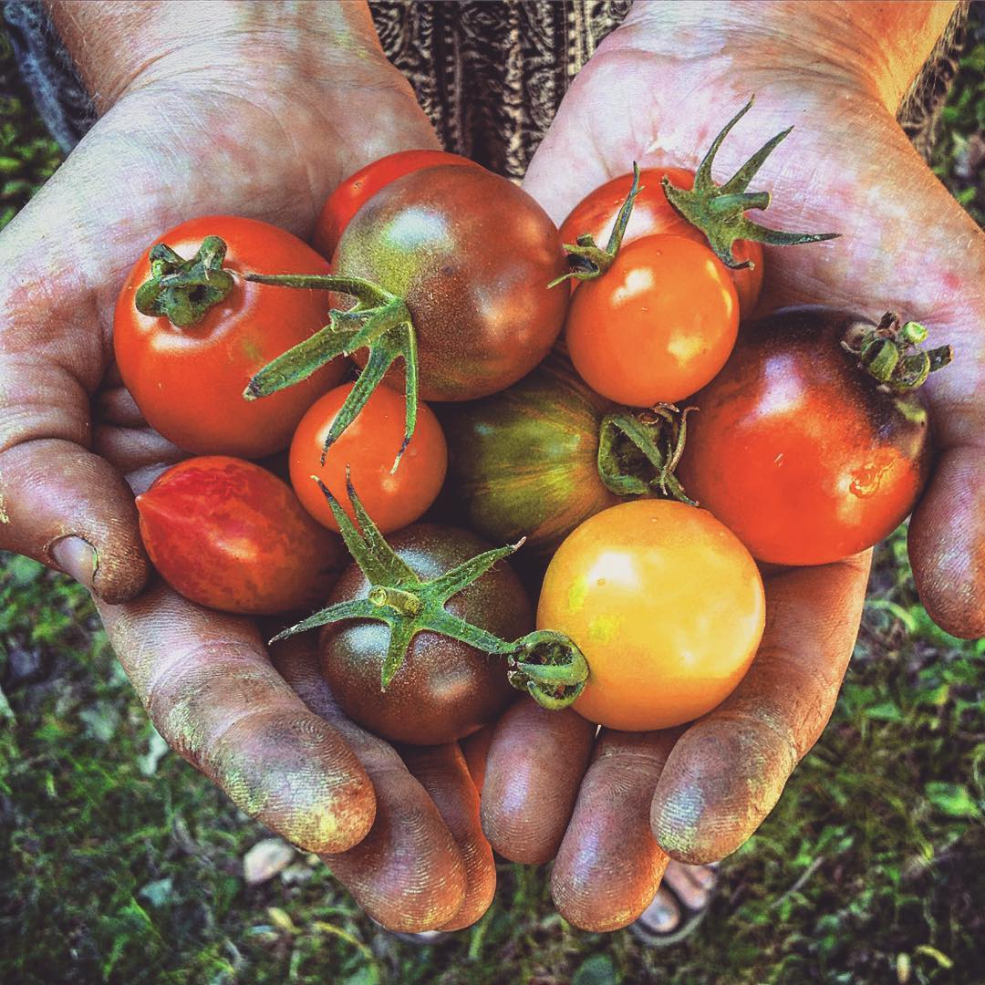 Photo of hands and a tomato