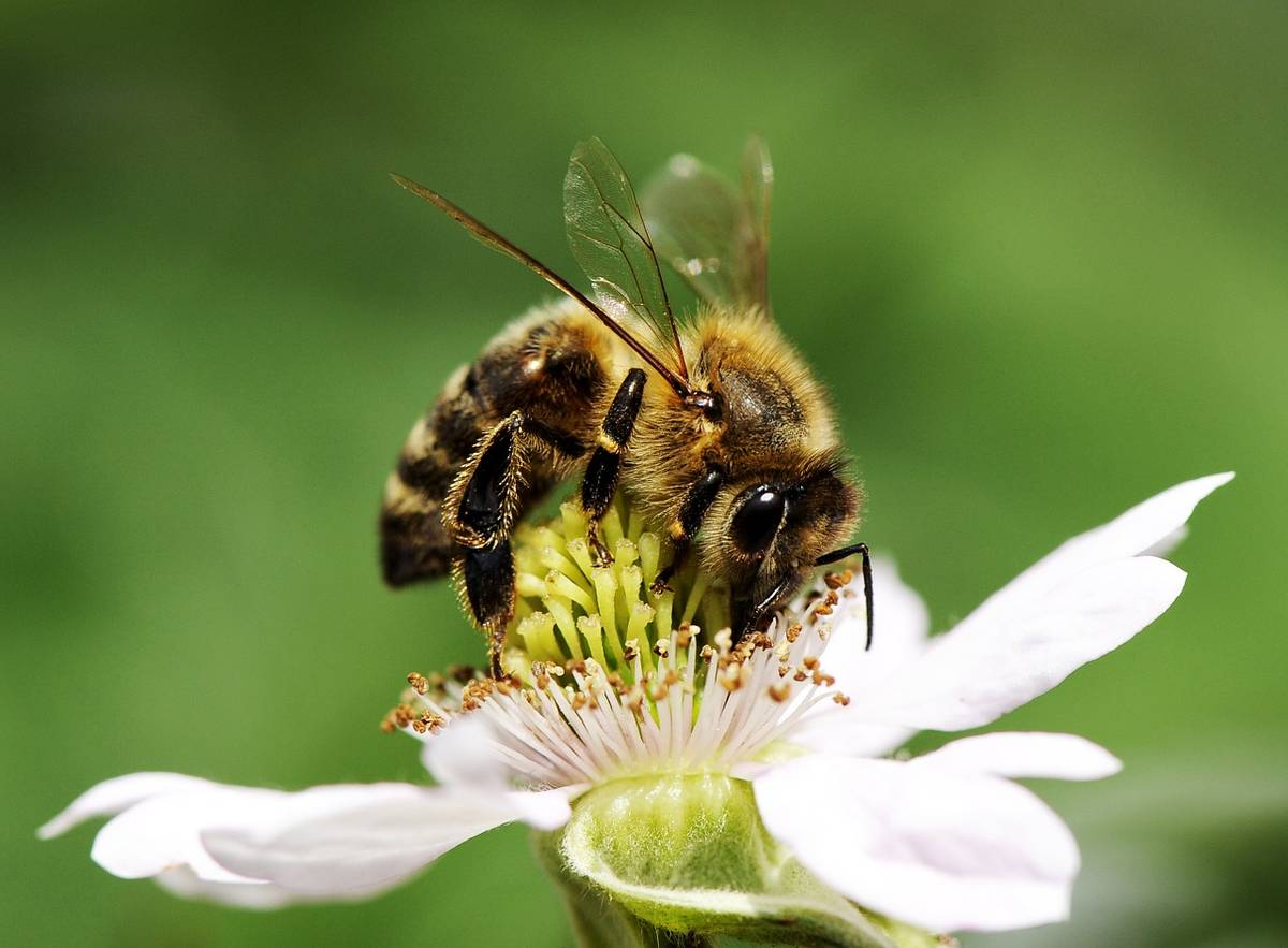 Photo of a bee