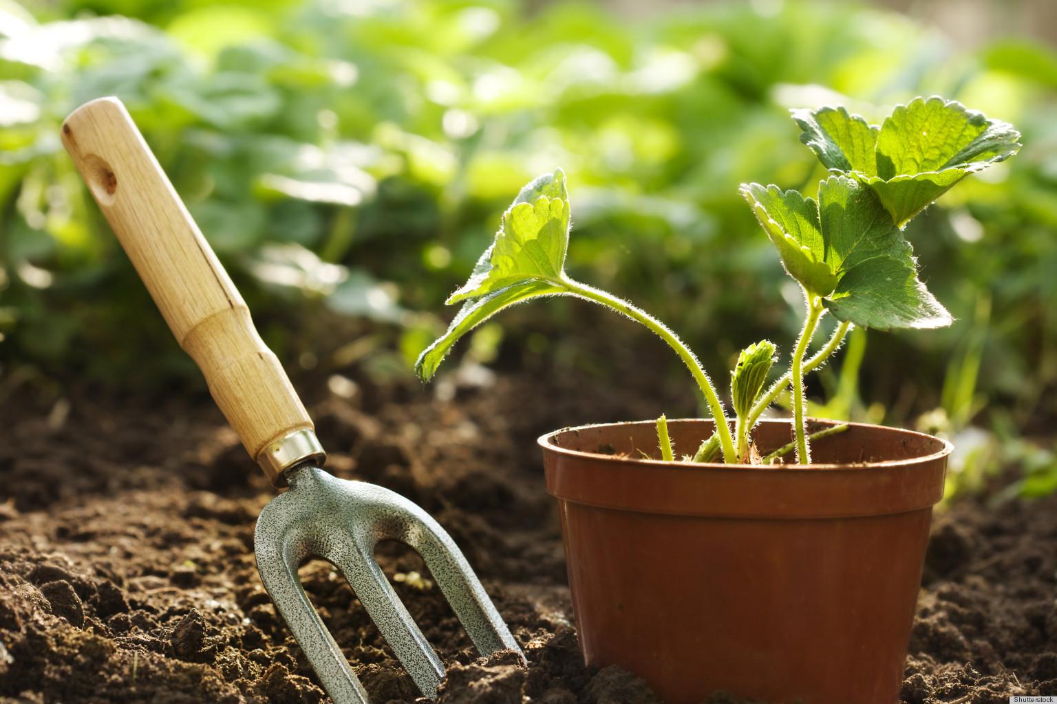 Beginner Organic Vegetable Gardening | Ottawa Public Library