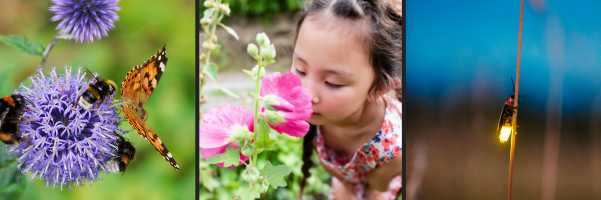 Insects pollinating flower; girl smelling flower; firefly