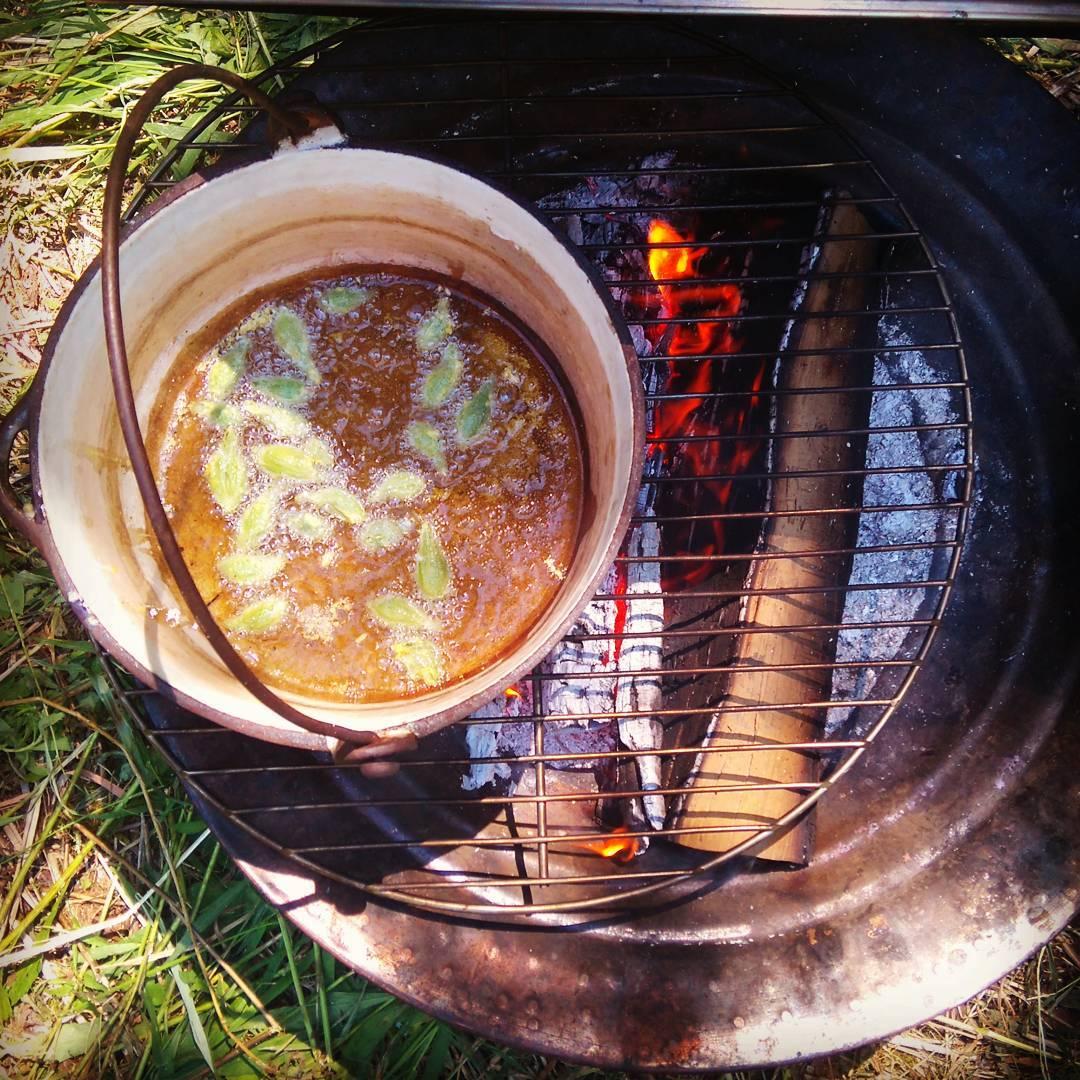 Gousses d'asclépiade dans la friture