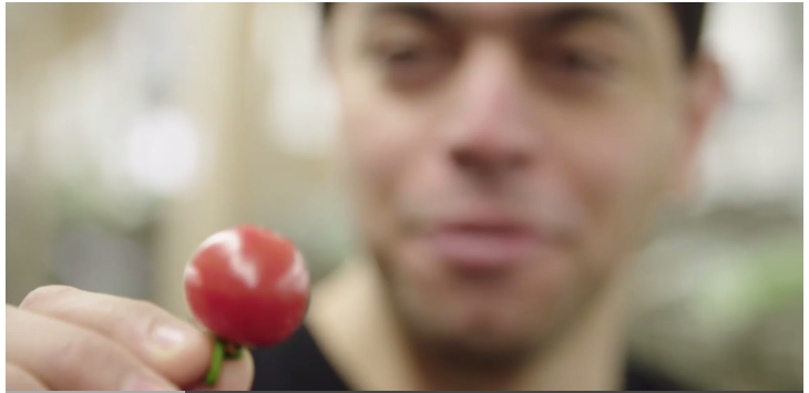 Mohamed Hage holding a cherry tomato.