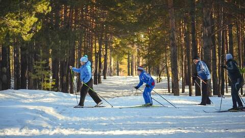 Photo of cross-country skiers
