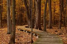 Photo of boardwalk through fall foliage